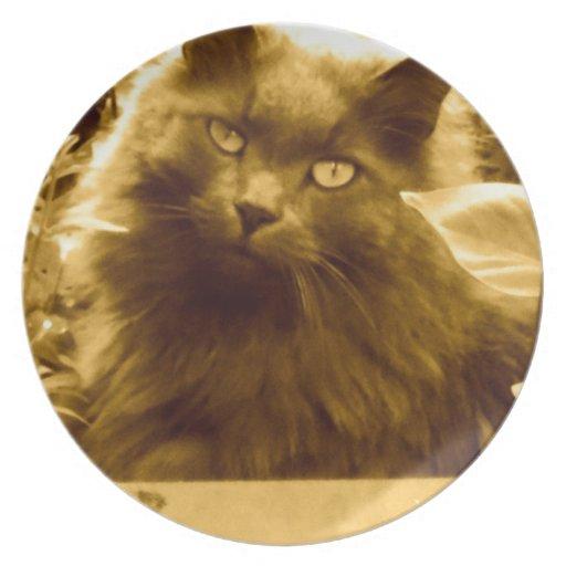 Gato azul ruso de pelo largo del vintage plato