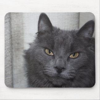 Gato azul ruso de pelo largo mouse pad