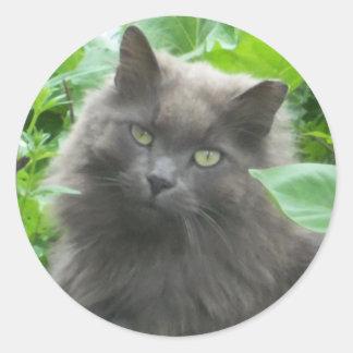 Gato azul ruso gris de pelo largo etiquetas redondas