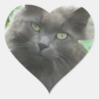 Gato azul ruso gris de pelo largo pegatinas corazon