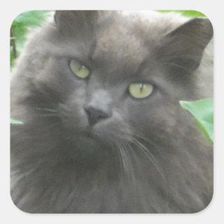 Gato azul ruso gris de pelo largo calcomanía cuadradase