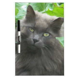 Gato azul ruso gris de pelo largo pizarra