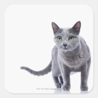 Gato azul ruso pegatinas cuadradas personalizadas