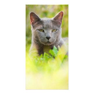 Gato azul ruso tarjeta con foto personalizada