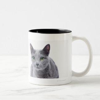 Gato azul ruso tazas