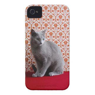 Gato (azul ruso) y fondo del papel pintado iPhone 4 carcasas