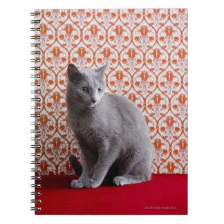 Gato (azul ruso) y fondo del papel pintado libros de apuntes