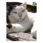Gato bicolor blanco y negro que gandulea en un par membrete personalizado
