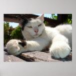 Gato bicolor blanco y negro que gandulea en un par impresiones