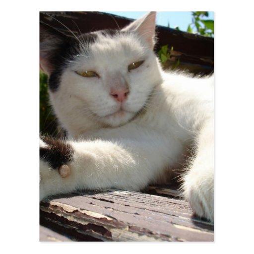 Gato bicolor blanco y negro que gandulea en un par postal