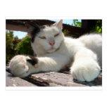 Gato bicolor blanco y negro que gandulea en un postal