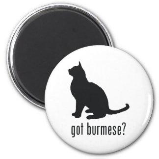 Gato birmano imán redondo 5 cm
