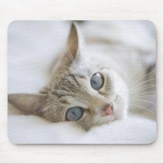 Gato blanco bonito con los ojos azules que ponen e tapete de ratones