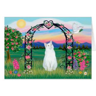 Gato blanco - cenador color de rosa tarjeta de felicitación