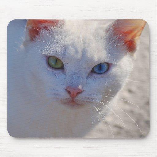 Gato blanco con el ojo azul y el ojo verde alfombrilla de ratones