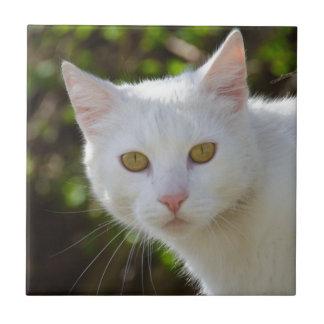 Gato blanco con los ojos amarillos azulejo cuadrado pequeño