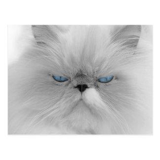 Gato blanco con los ojos azules tarjeta postal