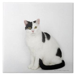 Gato blanco con los puntos negros azulejo cuadrado grande