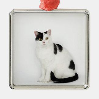 Gato blanco con los puntos negros adorno cuadrado plateado