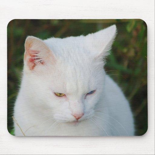 Gato blanco con un ojo verde y un ojo azul tapetes de raton