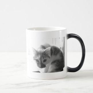 Gato blanco del gatito taza mágica