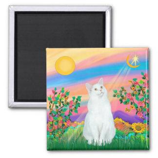 Gato blanco - estrella del día imán cuadrado