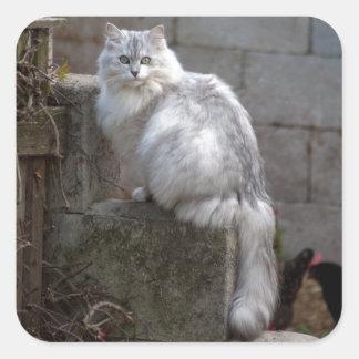 Gato blanco grisáceo del angora pegatina cuadrada