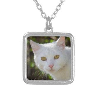 Gato blanco hermoso colgante cuadrado
