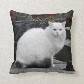 Gato blanco hermoso en un sepulcro almohada