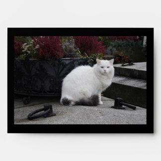 Gato blanco hermoso en un sepulcro sobres