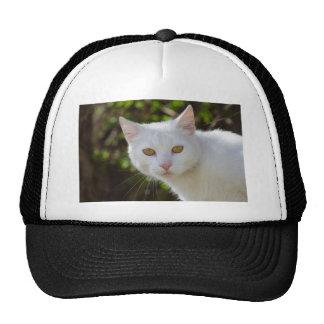 Gato blanco hermoso gorro