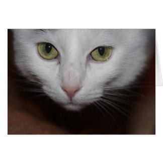 Gato blanco hermoso tarjeta de felicitación