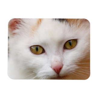 Gato blanco imán