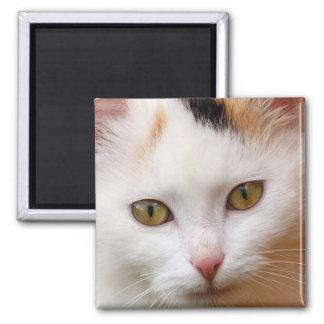 Gato blanco imán cuadrado