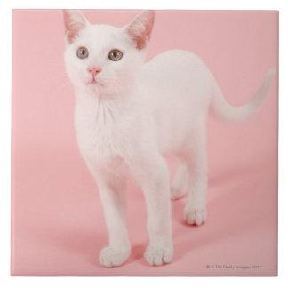 Gato blanco joven 2 azulejo cuadrado grande