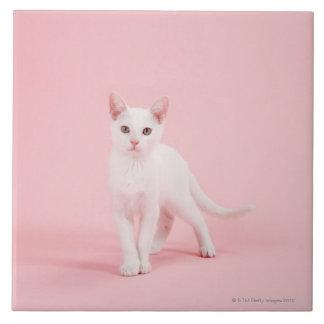 Gato blanco joven azulejo cuadrado grande