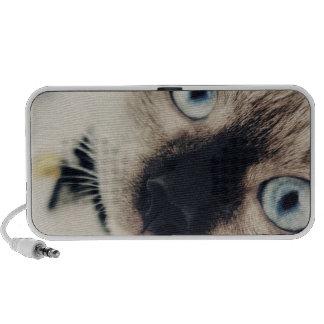 Gato blanco, ojos azules notebook altavoz
