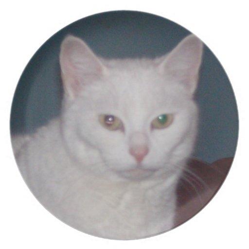 Gato blanco platos