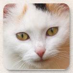 Gato blanco posavasos de bebida