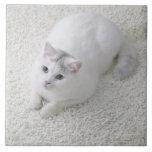 Gato blanco que mira para arriba azulejo cerámica