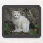 Gato blanco tapete de ratón