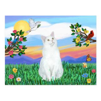 Gato blanco - vida brillante tarjetas postales