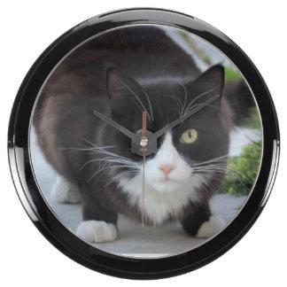 Gato blanco y negro reloj pecera