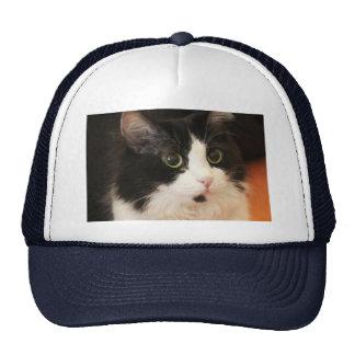 Gato blanco y negro con el gorra redondo del camio