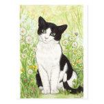 Gato blanco y negro con las margaritas tarjeta postal
