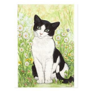 Gato blanco y negro con las margaritas postal