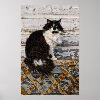 Gato blanco y negro de Tom del smoking en la cerca Póster