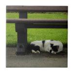Gato blanco y negro debajo del banco tejas
