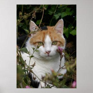 gato blanco y negro del jengibre hermoso en el jar póster