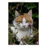 gato blanco y negro del jengibre hermoso en el jar felicitacion